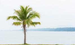 Kokospalm en overzees Stock Foto
