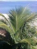 Kokospalm framme av stranden Arkivfoton