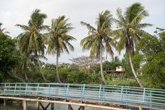 Kokospalm in het dorp stock foto's