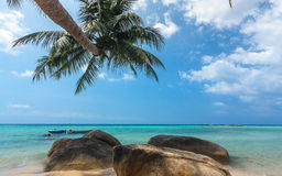 Kokospalm het hangen over het strand Royalty-vrije Stock Foto's