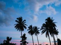 Kokospalm i solnedgångtid arkivfoton