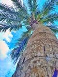 Kokospalm i Sri Lanka Royaltyfri Fotografi