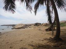 03 kokospalm i strandsida royaltyfri foto
