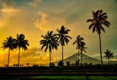 Kokospalm med berget och solnedgång royaltyfri bild