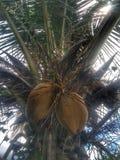 Kokospalm met een blad en een bewolkte achtergrond stock fotografie