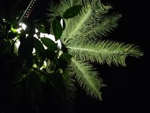 Kokospalm met een Vleklicht royalty-vrije stock foto's