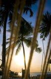 Kokospalm met toevluchtmening Stock Afbeeldingen