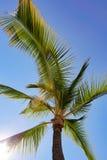 Kokospalm met zon door bladeren stock foto's