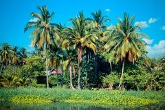 Kokospalm nära floden Arkivbild