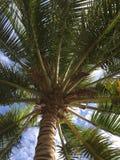 Kokospalm och himlen Fotografering för Bildbyråer