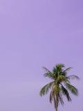 Kokospalm och himmel Royaltyfri Foto