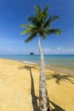 Kokospalm och strand Arkivbild