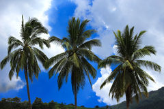Kokospalm onder de mooie hemel Stock Foto