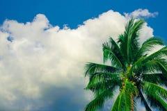 Kokospalm op de hemelachtergrond Royalty-vrije Stock Foto