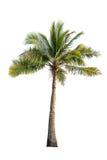 Kokospalm op geïsoleerde witte achtergrond Royalty-vrije Stock Afbeeldingen
