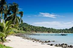Kokospalm op het strand Stock Foto