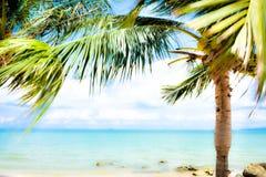 Kokospalm op het strand Stock Afbeelding