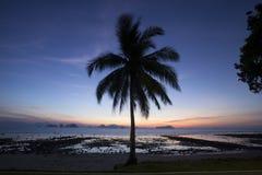 Kokospalm op het strand van phuket stock foto
