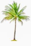 Kokospalm op witte achtergrond wordt geïsoleerd die stock foto's