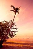 Kokospalm op zandstrand in keerkring op zonsondergang Royalty-vrije Stock Fotografie
