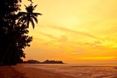 Kokospalm op zandstrand in keerkring op zonsondergang Royalty-vrije Stock Foto