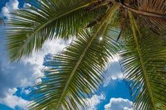 Kokospalm over blauwe hemelachtergrond Royalty-vrije Stock Fotografie