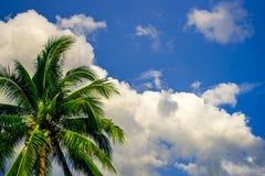 Kokospalm på en molnig bakgrund för blå himmel Royaltyfri Fotografi