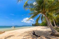 Kokospalm på havet Phu Quoc, Vietnam Royaltyfri Foto