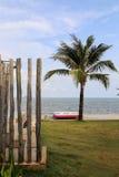 Kokospalm på stranden Royaltyfria Foton