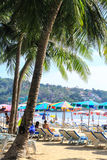Kokospalm in Phuket Stock Foto's