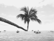 Kokospalm som sticker ut ut in i havet Arkivfoton