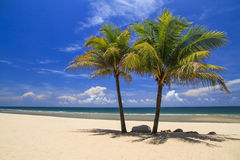 Kokospalm två på stranden Fotografering för Bildbyråer