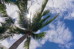 Kokospalm under blå himmel och den ljusa solen Royaltyfria Bilder