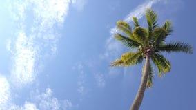 Kokospalm under blå himmel och morgonsolen med kopieringsutrymmeområde, ögla arkivfilmer