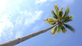 Kokospalm under blå himmel och morgonsolen med kopieringsutrymmeområde, ögla stock video