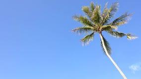 Kokospalm under blå himmel och morgonsolen med kopieringsutrymmeområde, ögla lager videofilmer