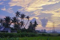 Kokospalm under solnedgångtimme Royaltyfri Bild