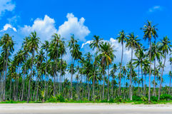 Kokospalm in zandig strand met blauwe achtergrond Stock Foto's
