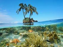 Kokospalmeilandje en koraalzeester onderwater Stock Foto