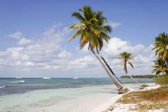 Kokospalmen Royalty-vrije Stock Afbeeldingen