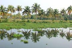 Kokospalmen Stock Afbeeldingen