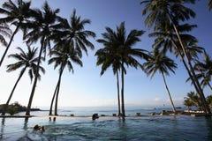 Kokospalmen & zwembad Stock Foto's