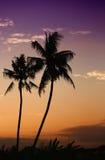 Kokospalmen in Bali tropisch eiland Stock Fotografie