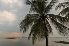 Kokospalmen bij Bangsean-overzees Stock Foto