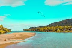 Kokospalmen in de Filippijnen royalty-vrije stock fotografie