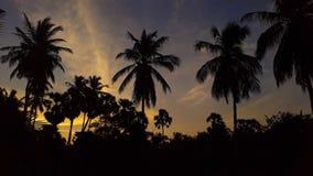 Kokospalmen in de zonsondergang stock foto's