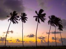 Kokospalmen in de zonsondergang royalty-vrije stock foto's