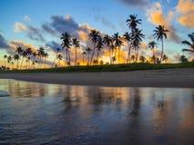 Kokospalmen in de zonsondergang Royalty-vrije Stock Fotografie