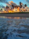 Kokospalmen in de zonsondergang Royalty-vrije Stock Afbeelding