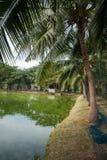Kokospalmen dichtbij vijver worden geplant die Royalty-vrije Stock Fotografie